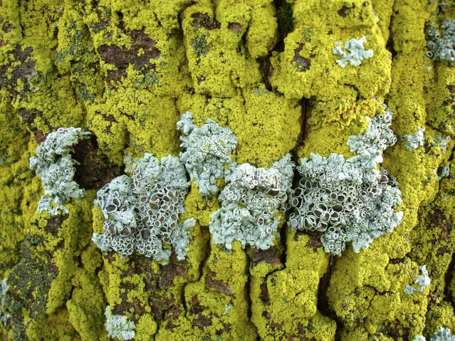 3 Tips to Clean a DECRA Metal Roof From Algae, Lichen, and Mold